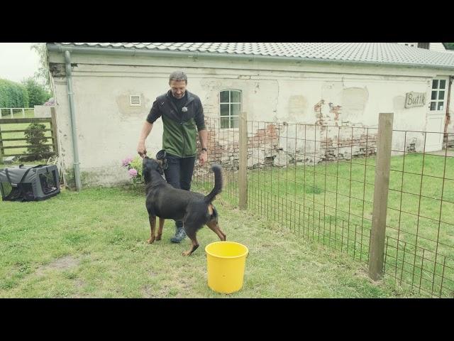 Hundetræning med Jan fra Egely Hunde - del 2 af 2