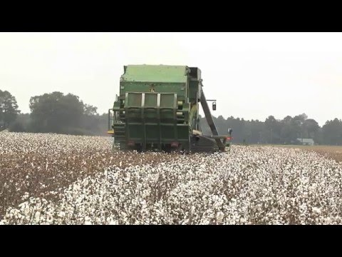 Cotton Production Meetings Prepare Growers For 2016 Crop
