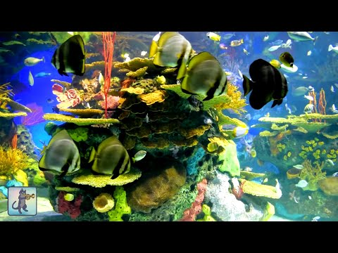 2 Hours of Beautiful Coral Reef Fish, Relaxing Ocean Fish, A