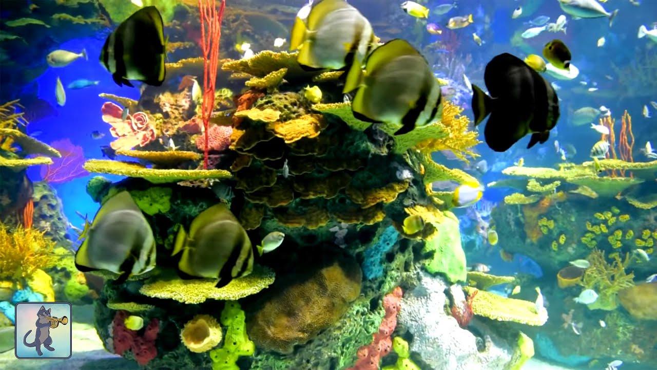 Cute Trumpet Wallpapers 2 Hours Of Beautiful Coral Reef Fish Relaxing Ocean Fish