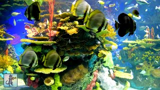 2 Hours of Beautiful Coral Reef Fish, Relaxing Ocean Fish, Aquarium Fish Tank & Relax Music 1080p HD
