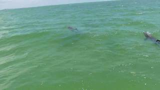The Dolphins of Fort Myers Beach - Sunset Ride Private Charters