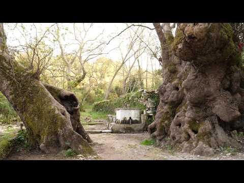 ΙΣΤΟΡΙΕΣ ΤΟΥ ΔΡΟΜΟΥ - Ιερός Ναός των Πέντε Παρθένων