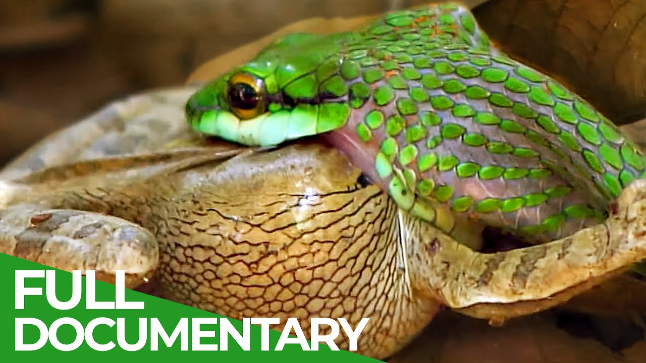 Costa Rica: Animal Paradise of the World | Free Documentary Nature