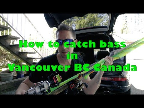 Here's What You Need To Catch Bass In Vancouver BC