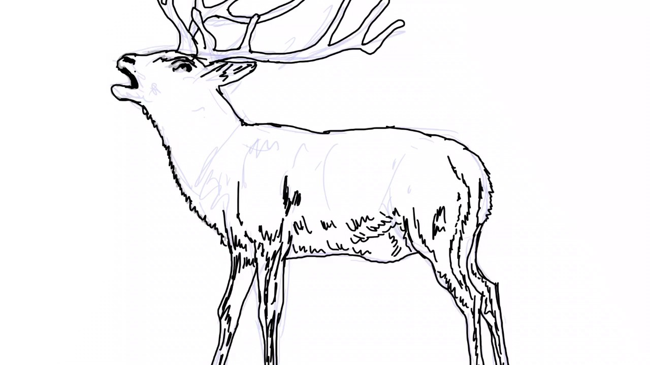 copyright free stag drawing for you to print and colour youtube