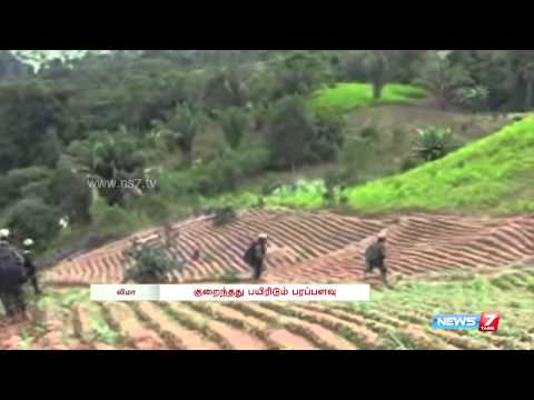 Area under Coca Cultivation reduces in Peru | World | News7 Tamil |