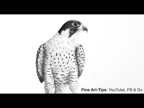 how-to-make-your-blacks-really-black---drawing-a-peregrine-falcon