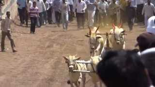 Repeat youtube video Bailgada Shashikant Bhalerao ( Saheb ) Kalamb , In Pimpalgaon 25-02-2013