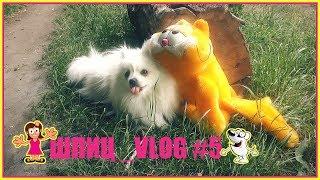 �������� ���� DOG VLOG #5 | ДЕВУШКА ИЗ ВЫСШЕГО ОБЩЕСТВА | КЛУБНИКА | ГАРФИЛЬД ������