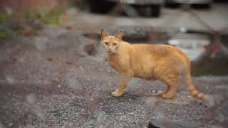 Baby Cats cute and Cute Baby Cat Videos Compilation (2018) // PART 5  StreetCat