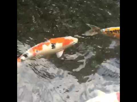 Chris Brazel teaches you the magical energy of fish
