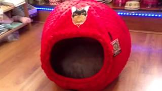Petlondon Rosie Yorkshire Terrier Dome Bed