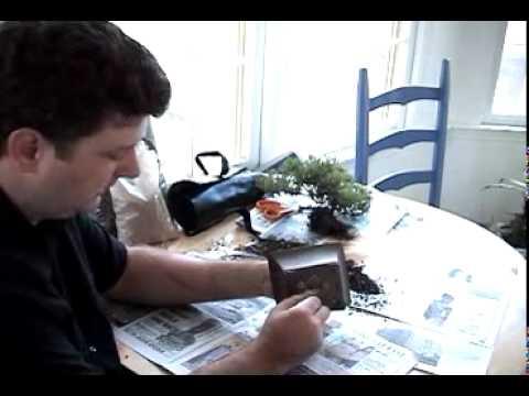 Bonsai Channel - Repotting