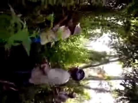Đi Lấy Mật Ong Rừng Tràm U Minh