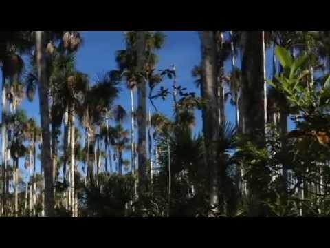 Investigaciones de Vanilla de Peru - Phd. John Janovec y colaboradores