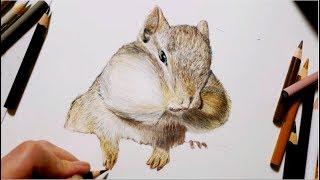 【色鉛筆】リスを描いてみた Draw a squirrel