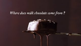 Where Does Milk Chocolate Come From?