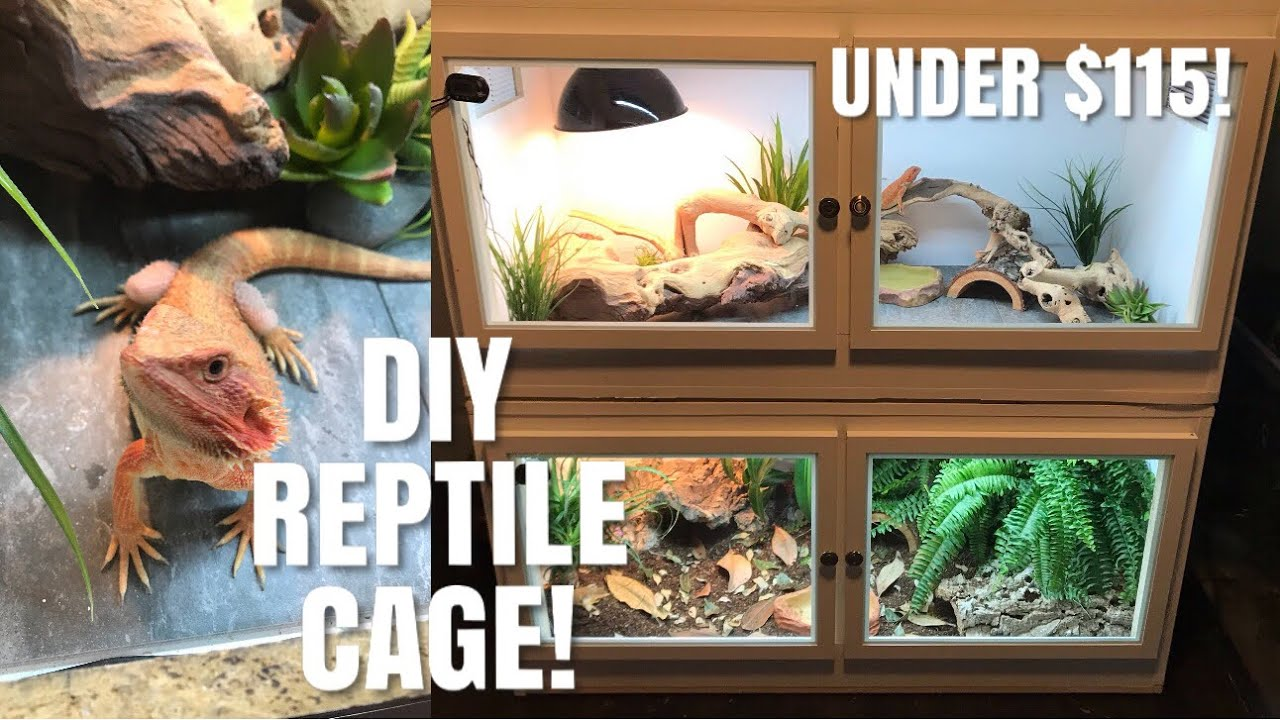 How To Build Your Own Reptile Enclosure! | Perfect for Bearded Dragons,  Skinks + More