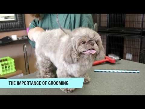 The Importance of Pet Grooming