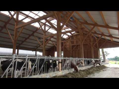 Houten stal van melkveebedrijf Wansink - Holten