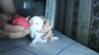 Котенка кормят с пипетки )))