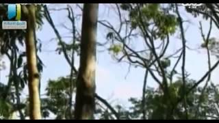الأمازون العالم المجهول - غابات الامازون