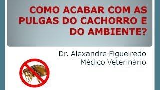 COMO ACABAR COM AS PULGAS DO CACHORRO E DO AMBIENTE?