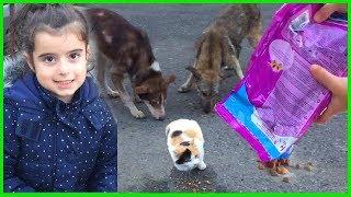 Sokağımızdaki Kedicik ve Köpeklere Mama Verdik, Onları Besledik.