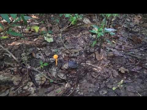 Hmong, Nceb Lau Qaib qab tshaj. 1 (HD) thumbnail