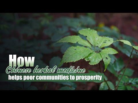 How Chinese herbal medicine helps poor communities to prospe