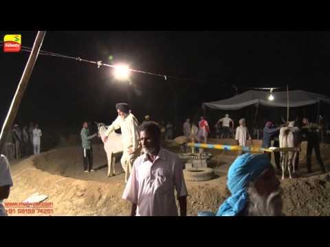 DHALIWAL (Jalandhar)   BULL HALTI RACES   ਬਲਦਾਂ ਦੀਆਂ ਹੱਲਟ ਦੌੜਾਂ - 2016    Full HD    Part LAST
