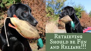 Labrador Retriever Training - Force Fetch vs Inductive Retrieve