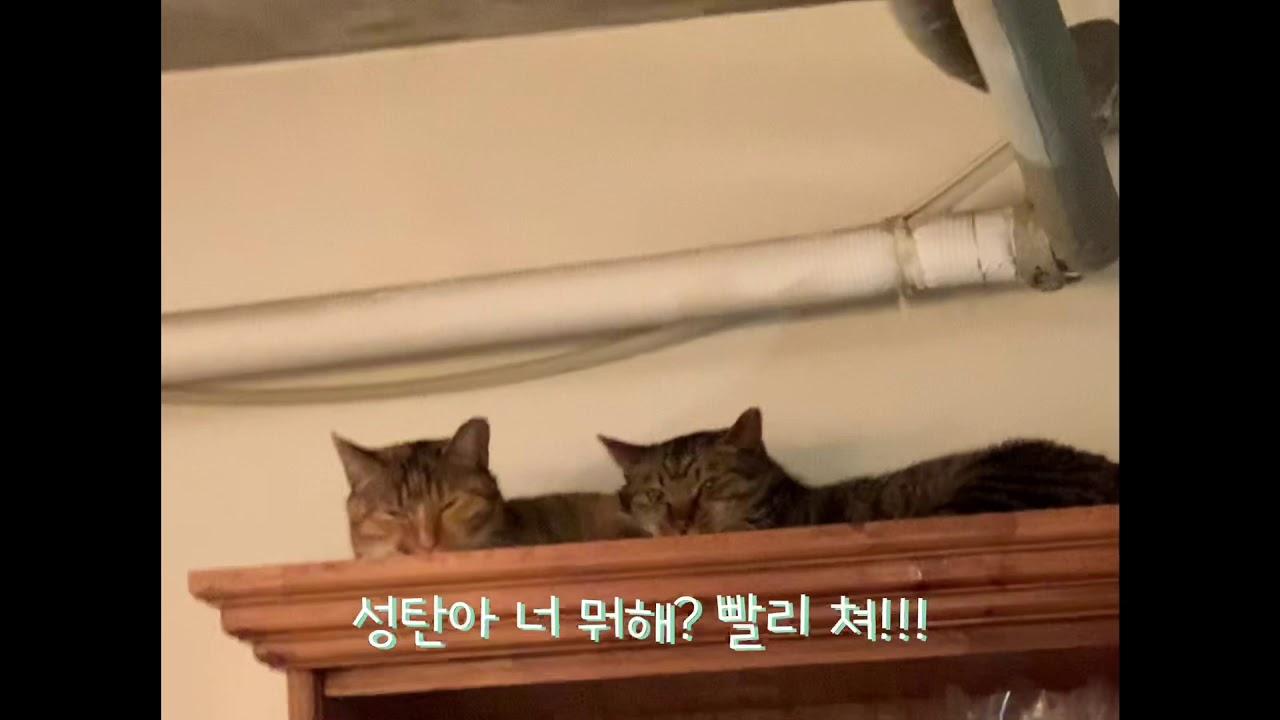"""고양이들의 """"우리 그냥 사랑하게 해주세요!!!"""""""