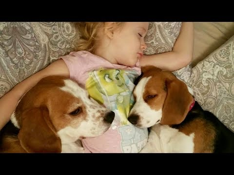 Sweet Dogs and Child Don't Want to Wake Up From Bed