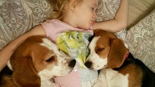 Cute Dogs and Little Girl Don't Want to Wake Up From Bed
