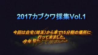 2017年5月28日 カブトムシ クワガタ 採集 埼玉県平野部 ムカデ.