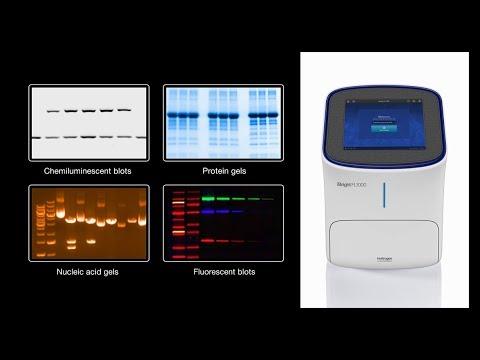 Invitrogen IBright Imaging Systems - The Stunningly Easy Western Blot And Gel Documentation Platform