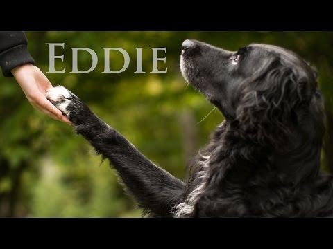 Eddie || The happy trick dog || My lighthouse