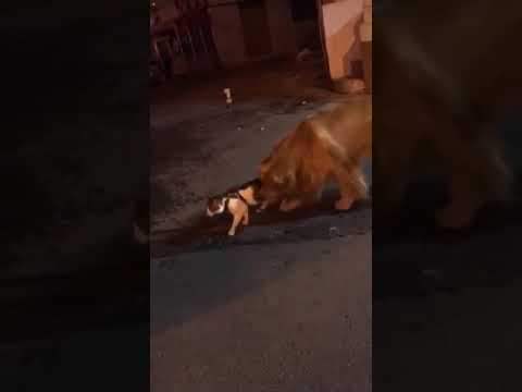 Aaron - Dog Stops Cat Fight Before It Happens