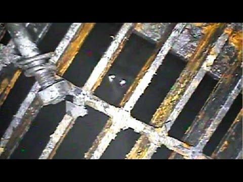 福島第一原発、1号機の原子炉 ...
