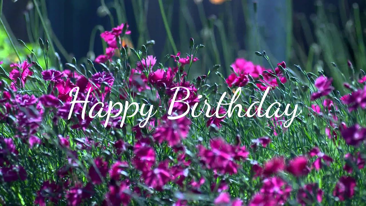 Happy Birthday Wishes Ecard Flowers Youtube