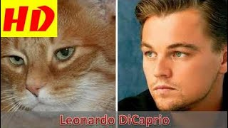 Animals That Look Like Celebrities - Leonardo DiCaprio Kristen Stewart Miley Cyrus Rihanna Сher HD