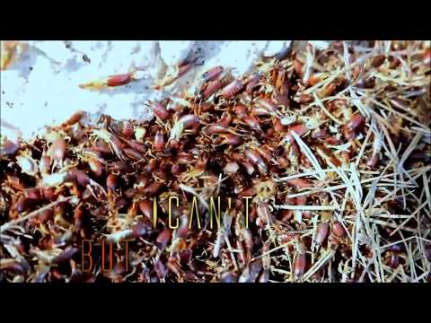 FUMIGATION - Earwigs & Earwax (lyric vid)