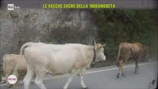 Le vacche sacre della 'ndrangheta - Nemo - Nessuno Escluso 09/03/2018