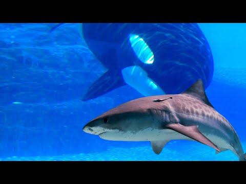 Most TERRIFYING Ocean Predators!
