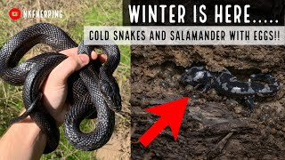 Winter is Here: First Snakes of the Season and Salamanders with Eggs!