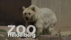 Zoo Heidelberg Teil 1    www.zoo-heidelberg.de