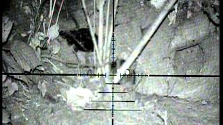 Air rifle pest control - Nightvision ratting #1 ~using the wolverine c'type