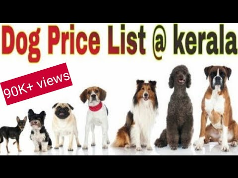 Dog Price list in kerala || home guard friendly dog|| top breads only